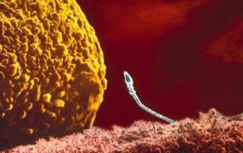 مراحل شکل گیری جنین